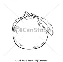 Tangerine clipart black and white