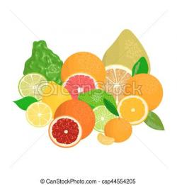 Grapefruit clipart blood