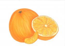 Grapefruit clipart orange fruit