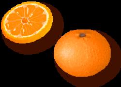Tangerine clipart clementine