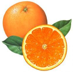 Mandarin clipart half orange