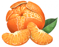 Tangerine clipart honey tangerine