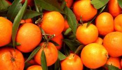 Mandarin clipart nagpur