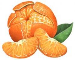 Mandarin clipart peeled