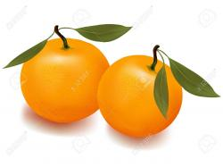 Tangerine clipart mandarin orange