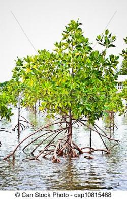 Swamp clipart mangrove forest