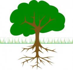 Mangrove clipart