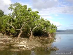 Mangrove clipart philippine