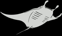 Manta Ray clipart