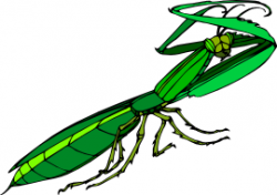 Praying Mantis clipart animated