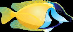 Angelfish clipart transparent fish
