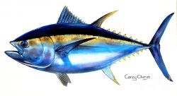 Tuna clipart big eye