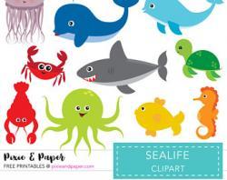 Marine Life clipart popular
