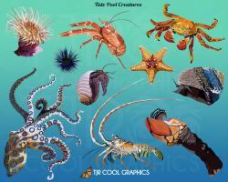 Sea Urchin clipart phytoplankton