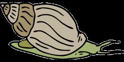 Marine Life clipart sea snail