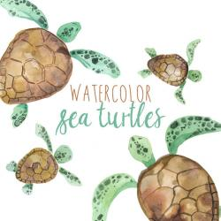 Marine Life clipart sea turtle