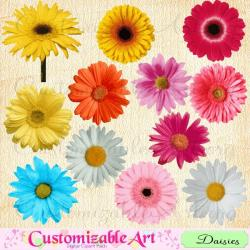 Coral clipart daisy
