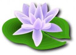 Mauve clipart lotus flower