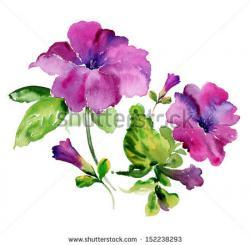Petunia clipart purple flower