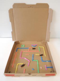 Maze clipart cockroach
