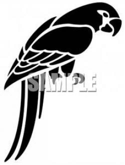 Shaow clipart parrot