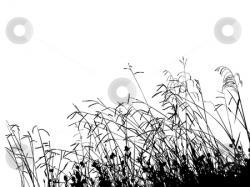 Grass clipart prairie