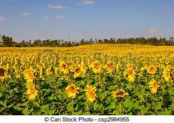 Meadow clipart sun flower