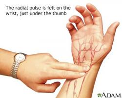 Pulse clipart human skin