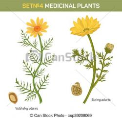 Marigold clipart