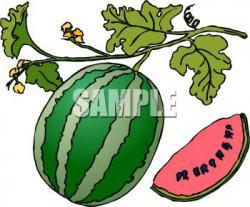 Melon clipart tree