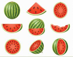 Melon clipart watermelon fruit