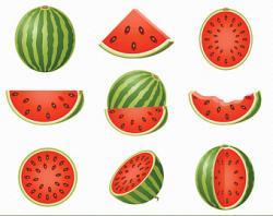 Melon clipart watermelon fruit
