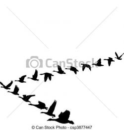 Geese Migration clipart flight clipart