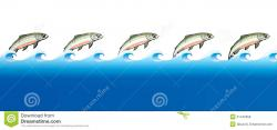 Salmon clipart swimming upstream