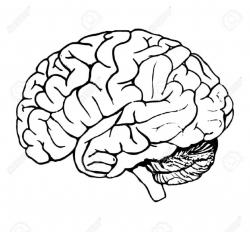 Brains clipart black and white