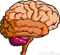 Mind clipart physiology