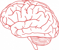 Brains clipart transparent background