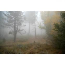 Mist clipart gray