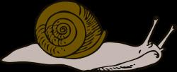 Slow clipart slug