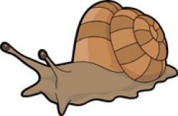 Mollusc clipart