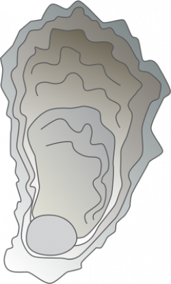 Mollusc clipart oyster shell