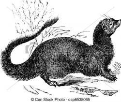 Mongoose clipart ichneumon