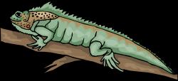 Horned Lizard clipart iguana