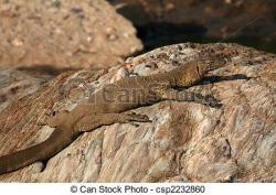 Monitor Lizard clipart africa