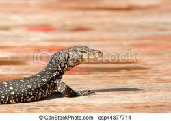Goanna clipart monitor lizard