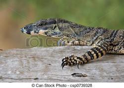 Monitor Lizard clipart goanna