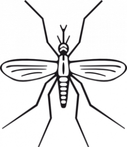 Amd clipart insect