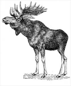 Moose clipart maine