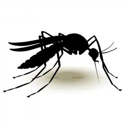 Shadows clipart mosquito