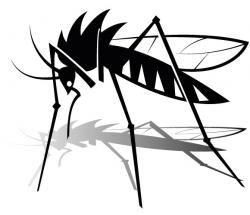 Shaow clipart mosquito